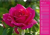 The amazing grace of Roses (Wall Calendar 2019 DIN A4 Landscape) - Produktdetailbild 3
