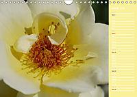 The amazing grace of Roses (Wall Calendar 2019 DIN A4 Landscape) - Produktdetailbild 6
