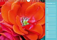 The amazing grace of Roses (Wall Calendar 2019 DIN A4 Landscape) - Produktdetailbild 11