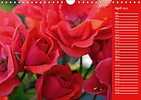 The amazing grace of Roses (Wall Calendar 2019 DIN A4 Landscape) - Produktdetailbild 4