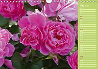 The amazing grace of Roses (Wall Calendar 2019 DIN A4 Landscape) - Produktdetailbild 5