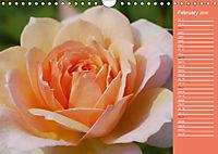 The amazing grace of Roses (Wall Calendar 2019 DIN A4 Landscape) - Produktdetailbild 2