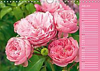The amazing grace of Roses (Wall Calendar 2019 DIN A4 Landscape) - Produktdetailbild 7