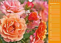 The amazing grace of Roses (Wall Calendar 2019 DIN A4 Landscape) - Produktdetailbild 9