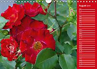 The amazing grace of Roses (Wall Calendar 2019 DIN A4 Landscape) - Produktdetailbild 8
