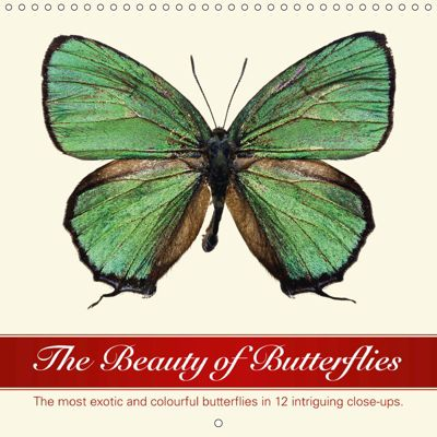 The Beauty of Butterflies (Wall Calendar 2019 300 × 300 mm Square), Wildlife Art Print