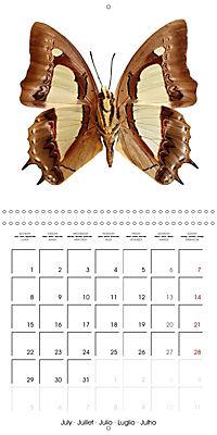 The Beauty of Butterflies (Wall Calendar 2019 300 × 300 mm Square) - Produktdetailbild 7