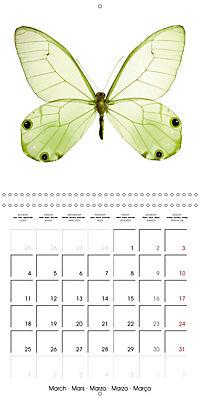 The Beauty of Butterflies (Wall Calendar 2019 300 × 300 mm Square) - Produktdetailbild 3