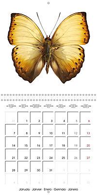 The Beauty of Butterflies (Wall Calendar 2019 300 × 300 mm Square) - Produktdetailbild 1