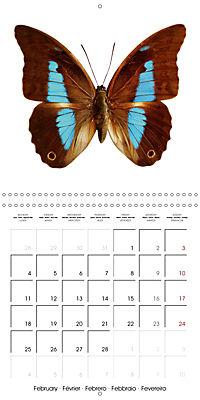 The Beauty of Butterflies (Wall Calendar 2019 300 × 300 mm Square) - Produktdetailbild 2