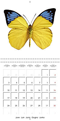 The Beauty of Butterflies (Wall Calendar 2019 300 × 300 mm Square) - Produktdetailbild 6