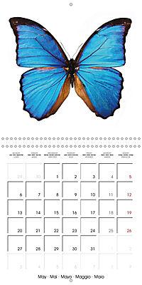 The Beauty of Butterflies (Wall Calendar 2019 300 × 300 mm Square) - Produktdetailbild 5