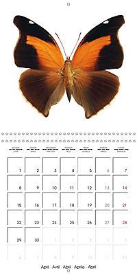 The Beauty of Butterflies (Wall Calendar 2019 300 × 300 mm Square) - Produktdetailbild 4