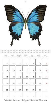 The Beauty of Butterflies (Wall Calendar 2019 300 × 300 mm Square) - Produktdetailbild 11