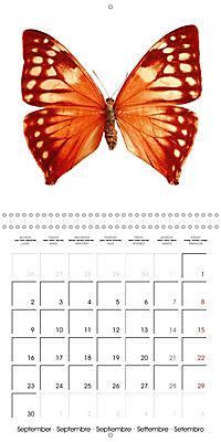 The Beauty of Butterflies (Wall Calendar 2019 300 × 300 mm Square) - Produktdetailbild 9