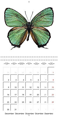 The Beauty of Butterflies (Wall Calendar 2019 300 × 300 mm Square) - Produktdetailbild 12