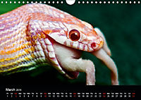 The Beauty of the Boa Constrictors (Wall Calendar 2019 DIN A4 Landscape) - Produktdetailbild 3