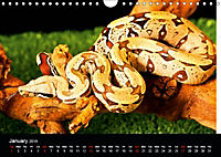 The Beauty of the Boa Constrictors (Wall Calendar 2019 DIN A4 Landscape) - Produktdetailbild 1