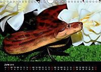 The Beauty of the Boa Constrictors (Wall Calendar 2019 DIN A4 Landscape) - Produktdetailbild 6