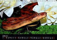 The Beauty of the Boa Constrictors (Wall Calendar 2019 DIN A4 Landscape) - Produktdetailbild 6