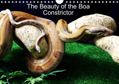 The Beauty of the Boa Constrictors (Wall Calendar 2019 DIN A4 Landscape), John Horton