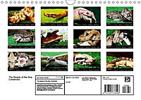 The Beauty of the Boa Constrictors (Wall Calendar 2019 DIN A4 Landscape) - Produktdetailbild 13