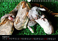 The Beauty of the Boa Constrictors (Wall Calendar 2019 DIN A4 Landscape) - Produktdetailbild 8