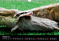 The Beauty of the Boa Constrictors (Wall Calendar 2019 DIN A4 Landscape) - Produktdetailbild 10