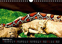 The Beauty of the Boa Constrictors (Wall Calendar 2019 DIN A4 Landscape) - Produktdetailbild 12