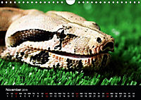 The Beauty of the Boa Constrictors (Wall Calendar 2019 DIN A4 Landscape) - Produktdetailbild 11
