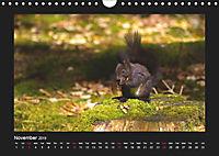 The Black Forest - UK Version (Wall Calendar 2019 DIN A4 Landscape) - Produktdetailbild 11