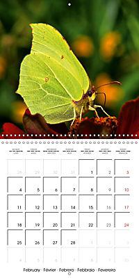 The colourful world of butterflies (Wall Calendar 2019 300 × 300 mm Square) - Produktdetailbild 2