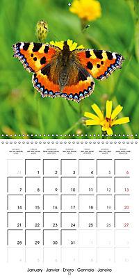 The colourful world of butterflies (Wall Calendar 2019 300 × 300 mm Square) - Produktdetailbild 1
