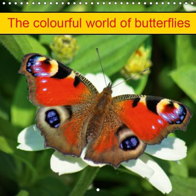 The colourful world of butterflies (Wall Calendar 2019 300 × 300 mm Square), kattobello