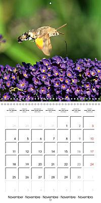 The colourful world of butterflies (Wall Calendar 2019 300 × 300 mm Square) - Produktdetailbild 11