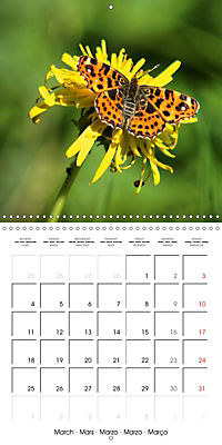The colourful world of butterflies (Wall Calendar 2019 300 × 300 mm Square) - Produktdetailbild 3