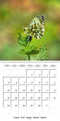 The colourful world of butterflies (Wall Calendar 2019 300 × 300 mm Square) - Produktdetailbild 8