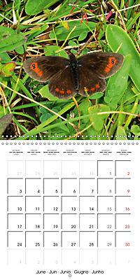 The colourful world of butterflies (Wall Calendar 2019 300 × 300 mm Square) - Produktdetailbild 6