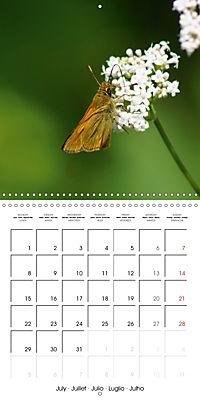 The colourful world of butterflies (Wall Calendar 2019 300 × 300 mm Square) - Produktdetailbild 7