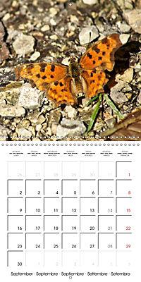 The colourful world of butterflies (Wall Calendar 2019 300 × 300 mm Square) - Produktdetailbild 9