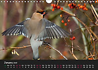 The Flight of Birds by Tony Mills (Wall Calendar 2019 DIN A4 Landscape) - Produktdetailbild 1