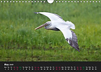 The Flight of Birds by Tony Mills (Wall Calendar 2019 DIN A4 Landscape) - Produktdetailbild 5