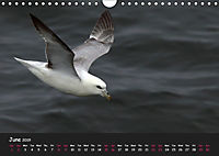 The Flight of Birds by Tony Mills (Wall Calendar 2019 DIN A4 Landscape) - Produktdetailbild 6