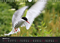 The Flight of Birds by Tony Mills (Wall Calendar 2019 DIN A4 Landscape) - Produktdetailbild 3