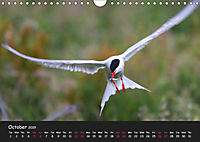 The Flight of Birds by Tony Mills (Wall Calendar 2019 DIN A4 Landscape) - Produktdetailbild 10