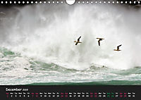 The Flight of Birds by Tony Mills (Wall Calendar 2019 DIN A4 Landscape) - Produktdetailbild 12