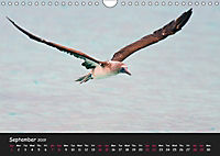 The Flight of Birds by Tony Mills (Wall Calendar 2019 DIN A4 Landscape) - Produktdetailbild 9