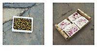 The Fragile Feast: Routes to Ferran Adrià - Produktdetailbild 9