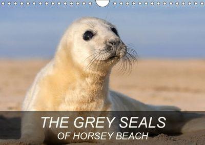 THE GREY SEALS OF HORSEY BEACH (Wall Calendar 2019 DIN A4 Landscape), Geoff du Feu