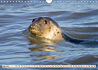THE GREY SEALS OF HORSEY BEACH (Wall Calendar 2019 DIN A4 Landscape) - Produktdetailbild 7